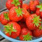 Strawberry Meringue Slice: Recipe