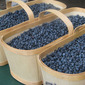 The Canadian Experience Food Project: Saguenay-Lac-Saint-Jean Wild Blueberries