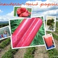 Strawberry-Mint Popsicle {#SummerOfThePopsicle Guest Post: The Not So Cheesy Kitchen}