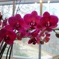 Sunday Orchids