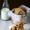 Baking | Eggless Almond Honey Wholegrain Cookies … #comfortfood #cookies #eggless #wholegrain