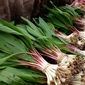 For the Love of Ramps