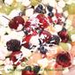 Fresh Fruit Ambrosia