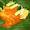 Fried Stingray (Ikan Pari) With Lemongrass Spicy Sauce