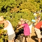 Book Your Tickets: Harvest Day at Nederburg