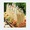 Pineapple-Orange Terrine
