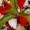 Fennel, Pepper & Mozzarella Salad