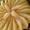 ALMOND cream PEAR pie GRANOLA crust