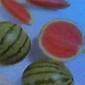 Cold Watermelon Slices