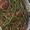 Mediterranean Haricots Verts