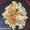 Bowtie Pasta with Cauliflower Ragu
