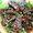 Hoisin-Glazed Eggplant