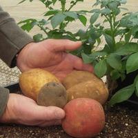 Racheal Werner (Colorado Potato Administrative Committee)