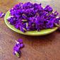 Foraging for Violets – Violet Syrup and Bonus Cocktail