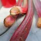 Spring Flavors: Rhubarb
