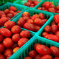 Tomato and Mint Chutney