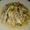 Kinilaw na Dilis (Anchovie Ceviche)