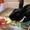 Day 8: Lovin' Zespri® SunGold Kiwifruit Steamed Prawns