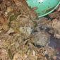 Coca Cola Crock Pot Brisket
