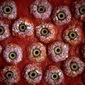 Bloody Eyeballs with a Side of Worms