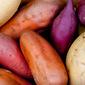 Sweet Potato Wild Rice Cabbage Rolls