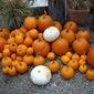 Thanksgiving Pumpkin Pie — White or Orange