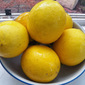 3 Citrus Marmalade