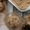 Black Garlic Chocolate Chunk Ice Cream - #NationalGarlicDay (+ Giveaway!)