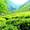 Organic Matcha Green Tea Powder Giveaway