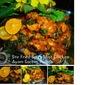 Stir Fried Spicy Mint Chicken