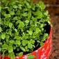 Gujarati methi thepla and bateta nu shaak with homegrown methi leaves