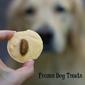 Frozen Homemade Dog Treats & Dog Cakes