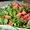 Strawberry, Kale and Walnut Salad