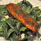 Grilled Salmon on Fresh Spinach; meanderings