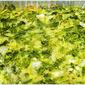 Broccoli Kugel