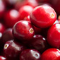 Thinking of Drinking: Cranberry Sangria