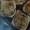 Sausage & Mushroom Breakfast/Brunch Frittatas