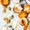 Grilled, Honeyed Peaches and Apricots with Shaved Grana Padano and Walnuts