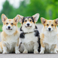 What to Feed Vegan Dogs