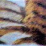 Honey~Cumin Seasoned and Grilled (Boneless) Chicken Breasts