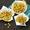 Crispy Baked Parmesan Garlic Edamame