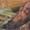Scrumptious Grilled Honey~Soy Chicken Drumsticks