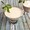 Fresh Mint Grasshopper Mocktail