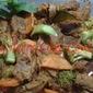 DAGING TUMIS PEDAS / SPICY BRAISED BEEF