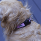 DIY Pet Projects: Adjustable Collar for A Cool Puppy