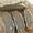 Recipe For Pure Rye Sourdough Bread