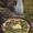 A Skywalk and a Lemon Scented Asparagus Egg Feldgieker Tart