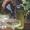Elderflower Cordial Prosecco Spritz