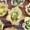 Recipe For Mini Zucchini Quiches