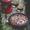 Cherry Coconut Clafoutis